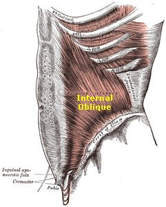 Internal Oblique