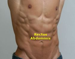 Rectus Abdominis